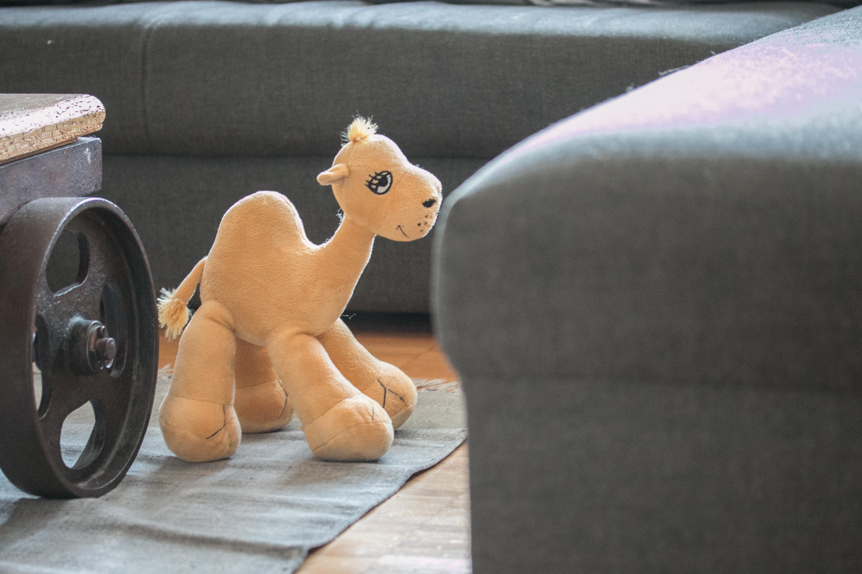 Hausstaub auf Teppich, Stofftier und Sofa