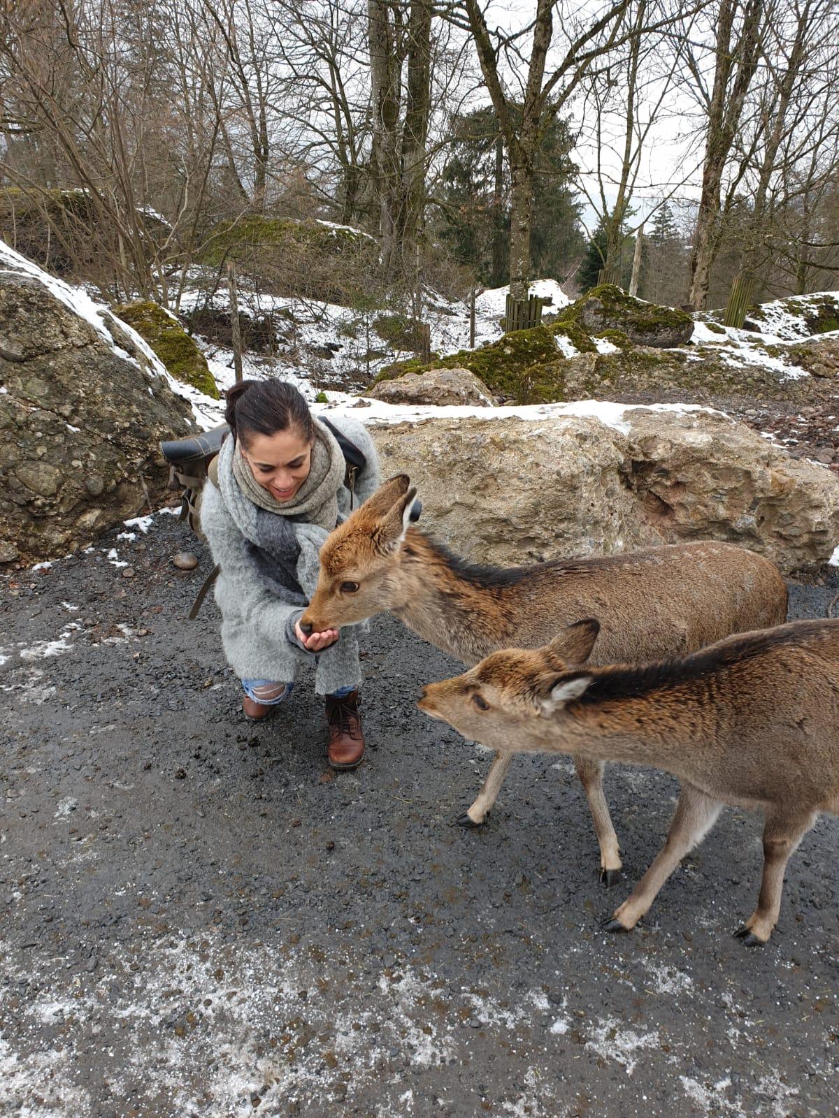 Tiere füttern im Tierpark Goldau