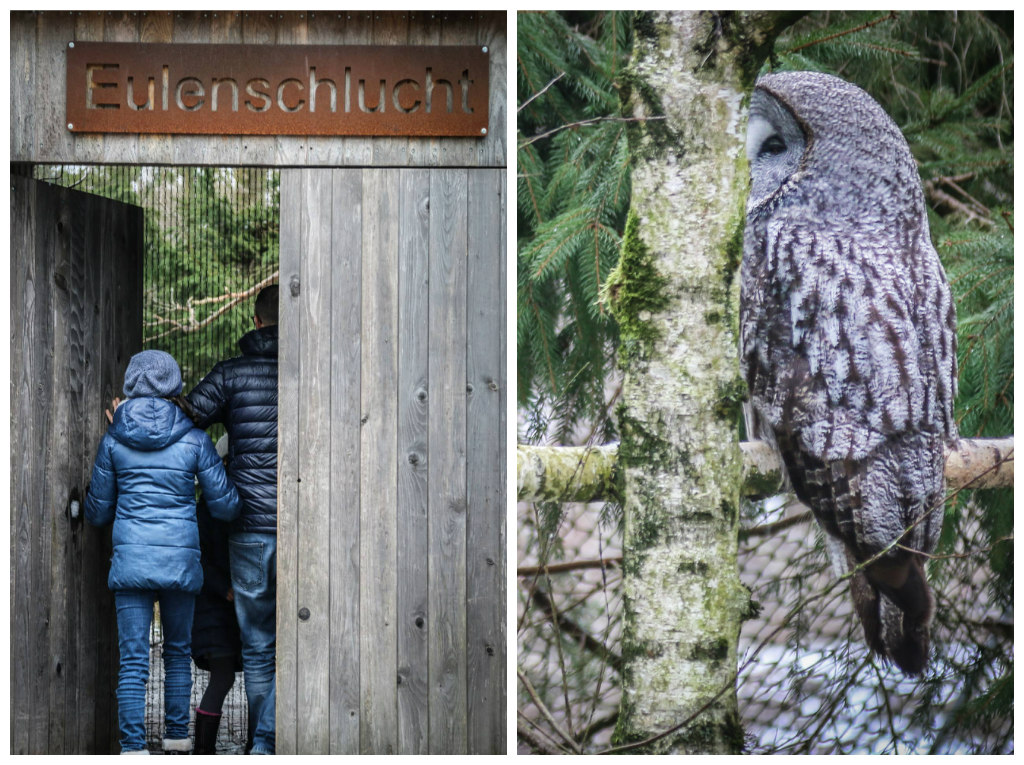 Collage Tierpark Goldau Eulen
