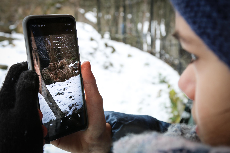 Wach im Winter Wettbewerb Tierpark Goldau