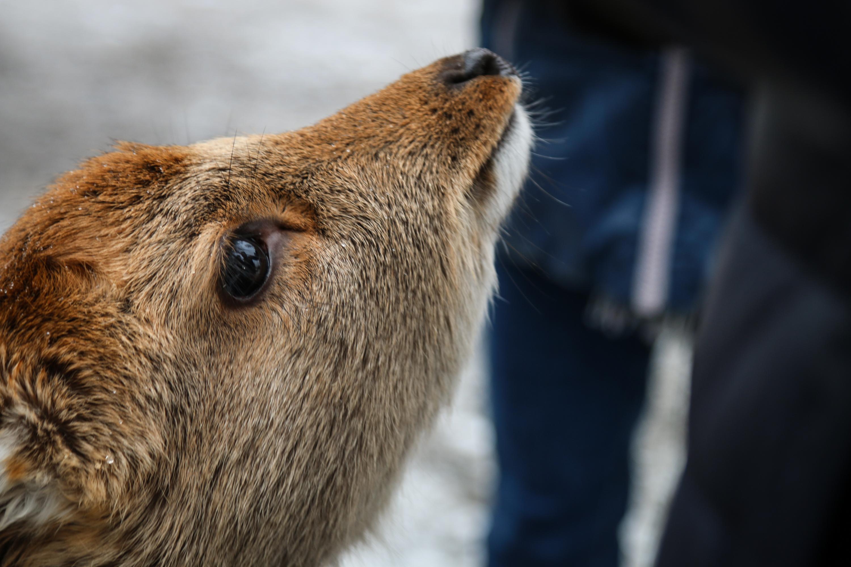 Reh Tierpark Goldau
